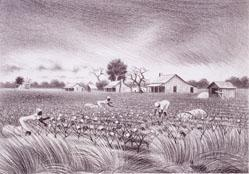 Cotton Pickers (Also Known As Mississippi Delta)