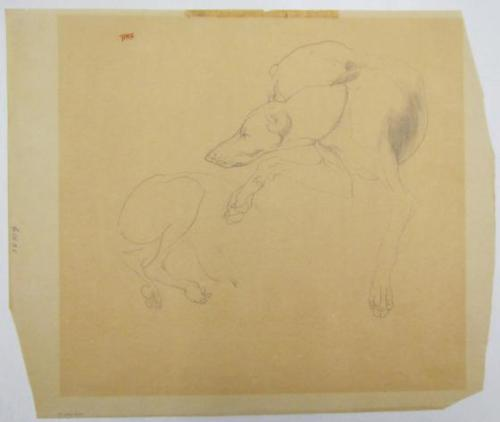 Untitled (Dogs)