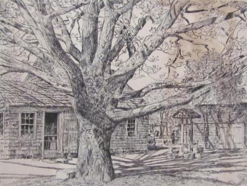 Oak And Old House In Spring, Easthampton