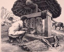 Grinding Sugar Cane (From Mexican Art, A Portfolio Of Mexican People And Places)