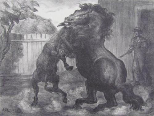 Stallion And Jack Fighting